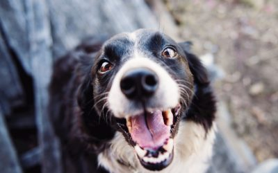 Foods that Enhance Your Dog's Oral Health